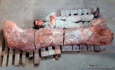 Paleontólogos han desenterrado en Argentina huesos fosilizados de lo que se dice que es la criatura más grande que alguna vez estuvo en la tierra, u...