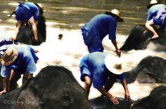 éléphants, Thaïlande ©Corinne Granger