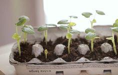Dream Garden, Herbs, Gardening, Flowers, Plants, Lawn And Garden, Herb, Plant, Royal Icing Flowers