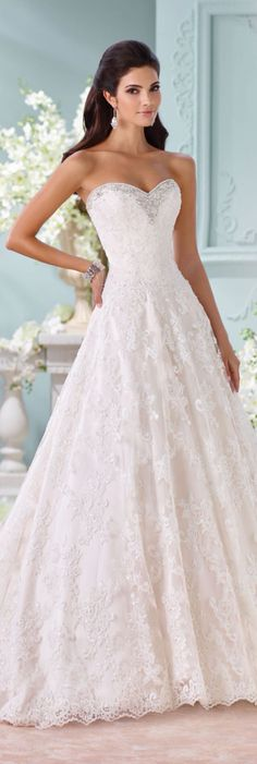 The David Tutera for Mon Cheri Spring 2016 Wedding Gown Collection - Style No. - - The David Tutera for Mon Cheri Spring 2016 Wedding Gown Collection – Style No. The David Tutera for Mon Cheri Spring 2016 Wedding Gown Collection – Style No. Wedding Gown Ballgown, Lace Wedding Dress, 2016 Wedding Dresses, Sweetheart Wedding Dress, Bridal Dresses, Wedding Gowns, Dress Lace, Prom Gowns, Mermaid Wedding