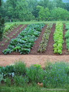 MySecretGarden: Colonial Gardens. Part 4.2 Monticello Vegetable Garden - wide row planting