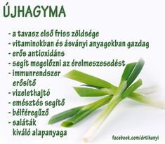 Életmód cikkek : Újhagyma Zöldség és gyümölcsök hatásai Healthy Tips, Healthy Eating, Healthy Recipes, Raw Cake, Raspberry Cheesecake, Sophisticated Bride, Smoothie Recipes, Green Beans, The Cure