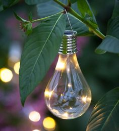 Buy Solar Light Bulbs from Sarah Raven: Shaped like a traditional filament light, bulbs to hang in a tree or around your seating area for summer evenings outside. Each bulb has its own individual solar panel. Patio Lighting, Tree Lighting, Landscape Lighting, Solar Pathway Lights, Solar String Lights, Light String, Solar Light Bulb, Bulb Lights, Mini Greenhouse