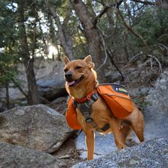 Off leash and fully equipped for a day at Humber Park! - Idyllwild, CA.