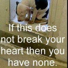 Sickening so many pups are treated so badly