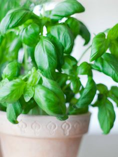 10 Healing Herbs You Can Grow Yourself