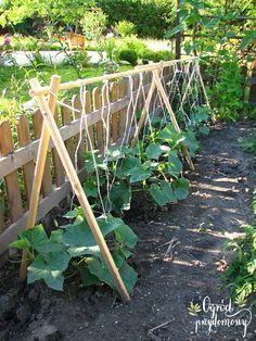 Uprawa ogórków przy podporach - składany stelaż | Ogród przydomowy - blog ogrodniczy, uprawa warzyw Small Courtyard Gardens, Small Courtyards, Vegetable Garden, Layout, Outdoor Structures, Vegetables, Flowers, Plants, Blog