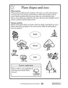 1st grade 2nd grade Kindergarten Science Worksheets: Plant shapes and sizes
