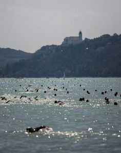 3rd of August 2013. Energetic amateur swimmers swim across the width of Lake Balaton, (at a narrow point) from Balatonfüred to Tihany.