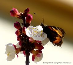 Moth, Animals, Papillons, Insects, Animales, Animaux, Animal, Animais
