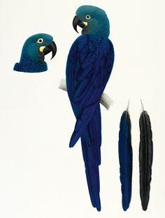 women-art-elizabeth-butterworth-macaw.jpg (650×860)
