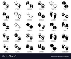 Animal feet silhouette, frog footprint and pets foots silhouettes prints. Wild african animals paw walking track or footprint tracks. Mouse Silhouette, Silhouette Vector, Silhouettes, Animal Footprints, Text Bubble, Planet Vector, Nature Vector, Animal Tracks, Tattoo
