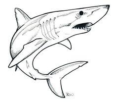 shark line drawing Shark Drawing Easy, Great White Shark Drawing, Animal Sketches, Animal Drawings, Cartoon Drawings, Art Drawings, Drawing Drawing, Drawings Of Sharks, Octopus Tattoo Design
