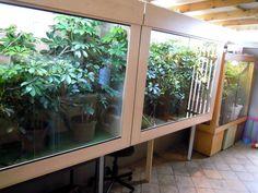 Atmosphere Chameleons enclosure ideas (plants)