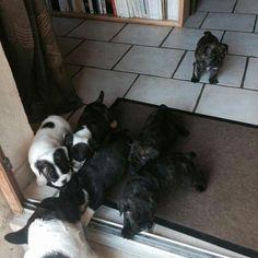 J'adore les regarder grandir...French Bulldog Puppy