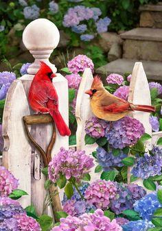 Huge Selection of Decorative Garden & House Flags. Pretty Birds, Love Birds, Beautiful Birds, Hydrangea Garden, Hydrangeas, Cardinal Birds, Bird Pictures, Flag Decor, Garden Flags