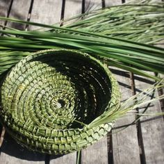 SYMBIOSIS 〰 RECIPROCITY To me, there are not many sweeter ways to spend a day than in my shed studio listening to Braiding Sweetgrass by Potawatomi woman, pl Willow Weaving, Basket Weaving, Pine Needle Crafts, Lomandra, Pine Needle Baskets, Basket Crafts, Newspaper Crafts, Pine Needles, Aboriginal Art