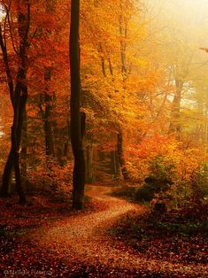 Autumn walks in the woods