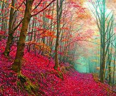 Beautiful Woods Path Trees Photo - FAV by TerriInVA