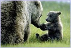 Image result for mother bear keeping eye on cubs