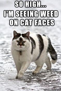 Weed Cat. memebyjohanna