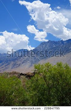 Tall thunder clouds above the eastern side of the Sierra Nevada mountains create a scenic background. ©Photo copyright by Marty Nelson. Photographer website:  http://www.shutterstock.com/cat.mhtml?gallery_id=1131029&page=1&inline=228847795