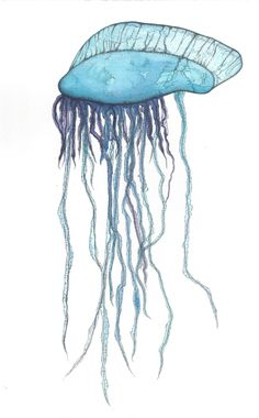 A recent pointillism / stippling / dots piece featuring a blue Portuguese Man-o-War / Portuguese Man of War / bluebottle / Physalis physalis.  Colour provided by watercolour / watercolor paint.  Dots all done by hand using a Sakura micron black pen with a 005 nib.  art / artist / ocean / sea / marine / animal / jellyfish / nature / wildlife