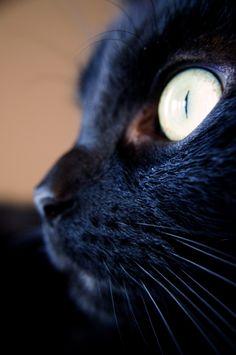 Black cat, I want one!