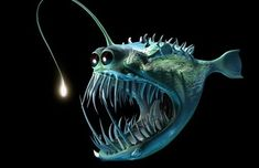 angler fish costume: take a hoodie, add fins, tail, eyes, teeth . Fish Images Hd, Costume Poisson, Angler Fish Costume, Deep Sea Creatures, Fish Wallpaper, Fishing Photography, Underwater Photography, Deep Sea Fishing, Sea Monsters
