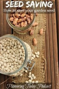 Learn how to save your garden seed. There's nothing like never having to buy seed again and upping your self-reliance and preparedness level. Great tips, her family has been saving several strains of seed for over 100 years.