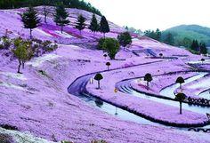 Japón tiene la Colina más Hermosa del Mundo