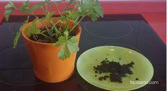 Repel·lent de formigues natural Life Savers, Kombucha, Planter Pots, Nature, Diy, Ideas Para, Medieval, Gardening, Gardens