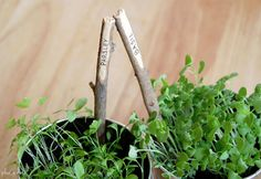 DIY plant markers in Crafts for decorating and home decor, parties and events