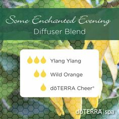 Make your evening an enchanted one with the soft and sweet smells of Ylang Ylang, Wild Orange, and doTERRA Cheer®. This blend provides a serene yet uplifting atmosphere reminiscent of any enchanted evening.