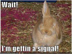 I'm getting a signal