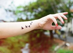 Birds. only nonpermanent