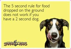 The five second rule is gone forever! I have two second dogs!