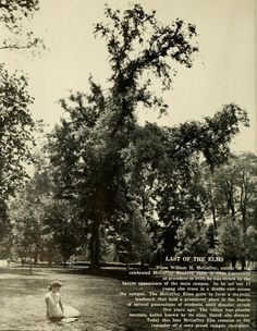 The Ohio Alumnus, October 1959. The last of the elm trees that President William McGuffey planted on College Green. :: Ohio University Archives