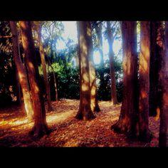 Wombat Gardens, Daylesford Perfect Peace, Daylesford, Wombat, Melbourne, Gardens, Victoria, Australia, King, World