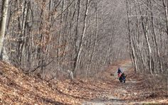 2. Cemetery Trail at Pardon Gray Preserve, Tiverton