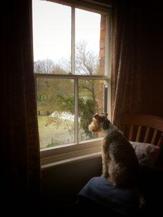 Watching the ducks