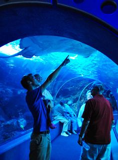 Maui Ocean Center - this is an awesome place to go. I loved it!!