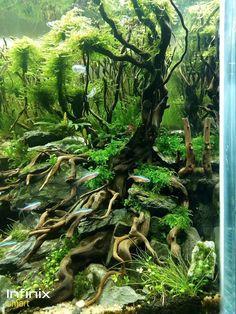 10 Tips on Designing a Freshwater Nature Aquarium Tropical Fish Aquarium, Home Aquarium, Nature Aquarium, Aquarium Design, Aquarium Fish Tank, Aquascaping, Paludarium, Vivarium, Water Terrarium