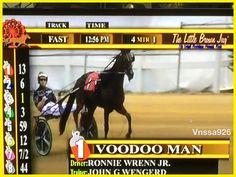 LBJ#18 Harness Racing, Horses, Animals, Animales, Animaux, Animal, Animais, Horse