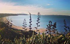 Happy Waitangi Day New Zealand. I'll be there next year to celebrate  #newzealand #nz #beach #easternbeach #nzmustdo #travel by sara_bigworldsmallme http://ift.tt/1JtS0vo