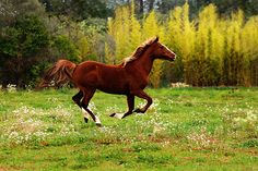 For the horse lovers :) (via 500px / Isma by Cindy Serva)