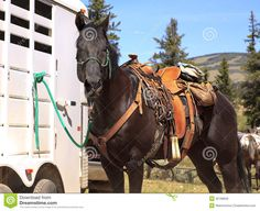 brown-horse-western-saddle-typical-pack-tied-to-trailer-outside-32198620.jpg (1300×1061)