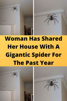 #Woman Has Shared Her #House With A #Gigantic Spider For The #Past Year