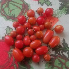 Some mulch around the base of my tomato plants has done wonders for the quality and production of my cherry lovelies. Most years things taper off in Nov/December but not this year!  #gardening #urbangarden