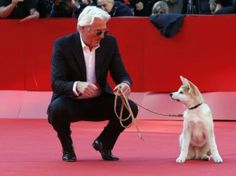 Richard Gere hit red carpet with his four-legged friend at Rome Film Festival for screening of 'Hachiko: A Dog's Story' about a professor who takes an abandoned dog into his home. If you have not seen this movie, rent it. One of my favorite animal movies. Richard Gere, Hachi A Dogs Tale, A Dog's Tale, Led Dog Collar, Hachiko, Akita Dog, Look At You, Shiba Inu, Dog Accessories